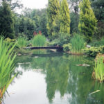 Pond, East Horsley, Surrey